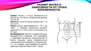 Размер матки на 8 неделе беременности