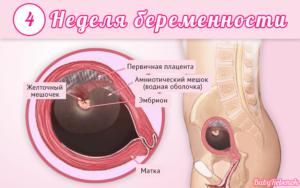 4 недели беременности от зачатия что происходит