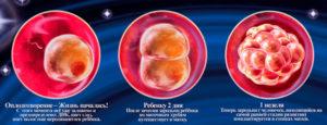1 неделя беременности после зачатия что происходит