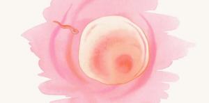 Выделения беременности на 2 неделе после зачатия