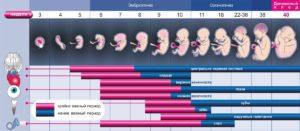 Первые недели беременности что нужно знать и делать