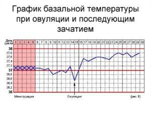 Температура при овуляции