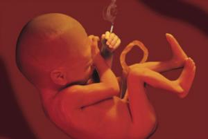 Курение на 5 неделе беременности