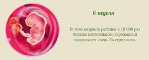 6 неделя беременности признаки и ощущения