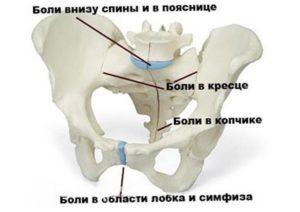 34 неделя беременности болит лобковая кость