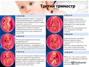 Опасные недели беременности в третьем триместре