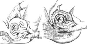 Может ли гинеколог на 2 недели определить беременность