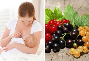 Можно ли кормящей маме смородину черную
