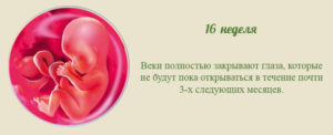 16 неделя календарь беременности