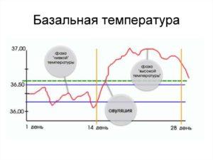 Базальная температура в день овуляции