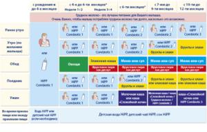 Схема кормления ребенка 6 месяцев