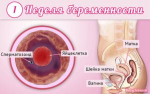 Первые недели беременности ощущения