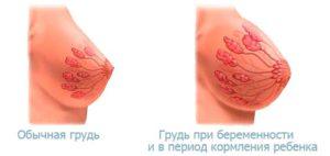 Во время овуляции набухает грудь