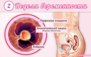 Беременность 2 недели от зачатия симптомы