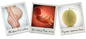 Плод на 34 неделе беременности рост вес