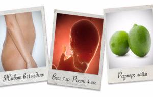 11 неделя беременности от зачатия
