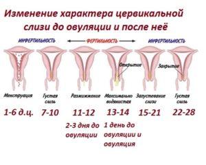 Боли при овуляции симптомы у женщин