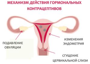 Происходит ли овуляция при приеме противозачаточных