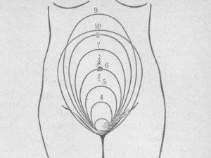 Размер матки на 12 неделе беременности