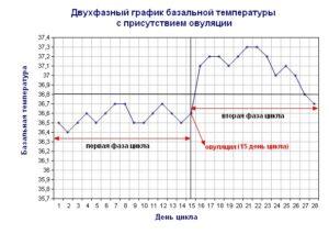 Измерение базальной температуры для определения овуляции
