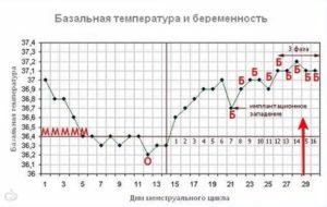 Базальная температура на 7 неделе беременности