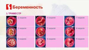 Состояние в первом триместре беременности