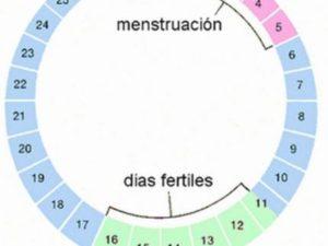 Что такое овуляция и фертильные дни