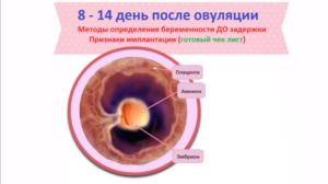 Признаки зачатия после овуляции до задержки