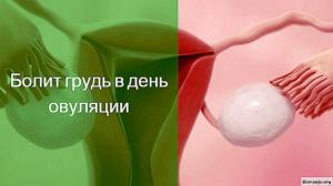 Болит грудь до или после овуляции