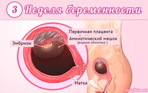 Симптомы беременности на 3 неделе после зачатия