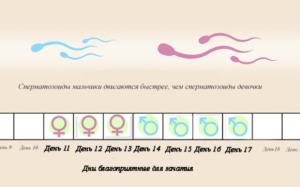 Беременность в день овуляции