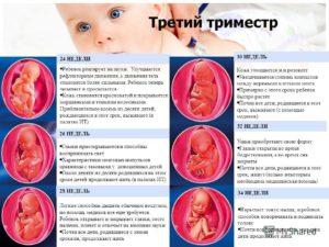 Третий триместр беременности особенности