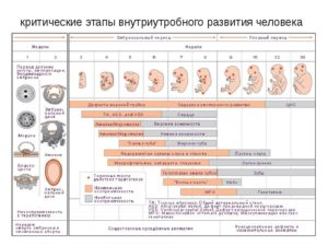 Самые опасные недели беременности в первом триместре