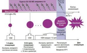 Препараты для стимуляции овуляции при эко