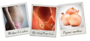 Размеры плода на 17 неделе беременности