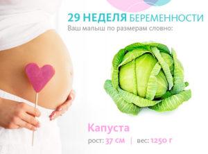 29 недель беременности рост и вес ребенка