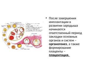 На какой день после овуляции происходит имплантация плодного яйца