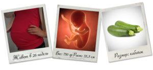 26 неделя беременности вес и рост плода