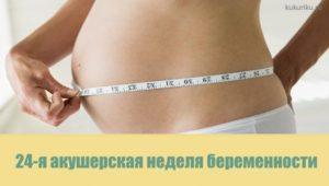 24 акушерская неделя беременности
