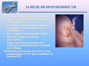 24 неделя беременности что происходит с малышом