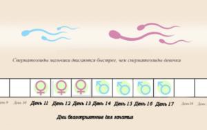 За сколько дней до овуляции нужно начинать зачатие