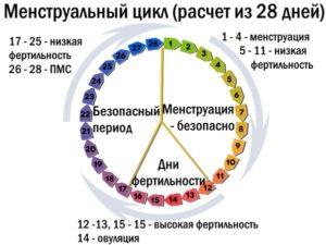 Цикл овуляции