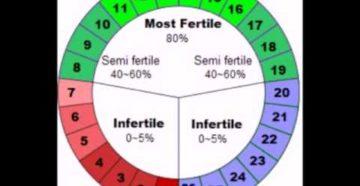Что такое фертильные дни и овуляция у женщин