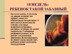 Развитие ребенка на 18 неделе беременности